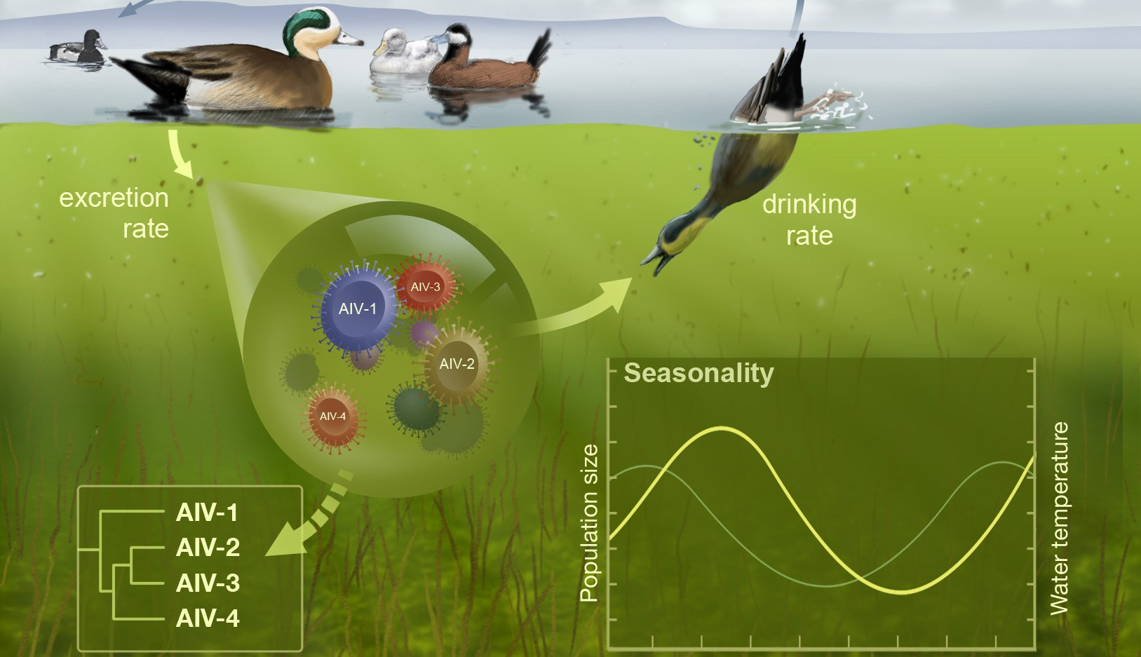 Phylodynamics of Avian influenza